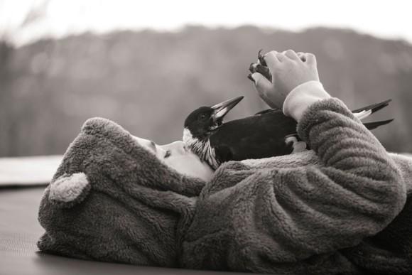 傷ついたカササギのヒナを保護したら、やることなすこと人間じみてきた。誰よりも家族を思いやる愛情深い鳥人間となった。(オーストラリア)