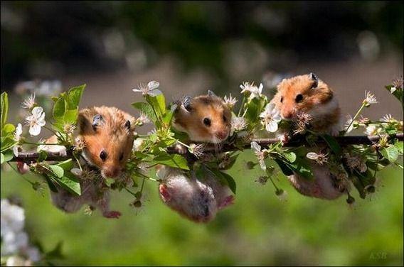 hamsters_08