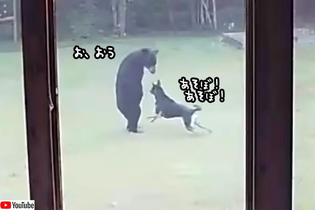 ともだち、できたよ。愛犬が裏庭で仲良く遊んでいたのはクマだった