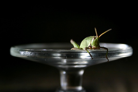 insect drinking drink 23
