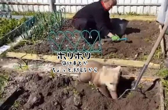 オンリーロシア?コグマが庭仕事を手伝う風景