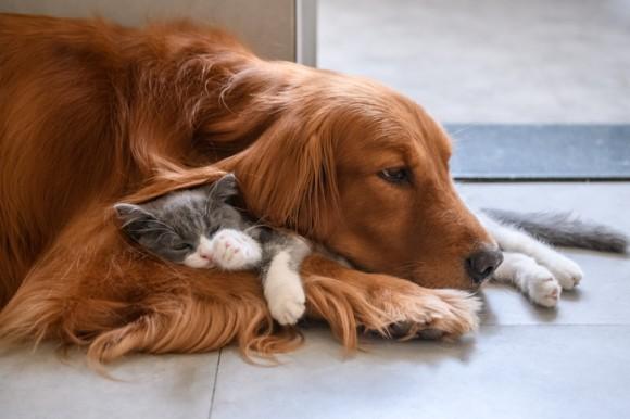 アメリカで新たな動物保護法案が提出される。虐待者には最大7年の懲役