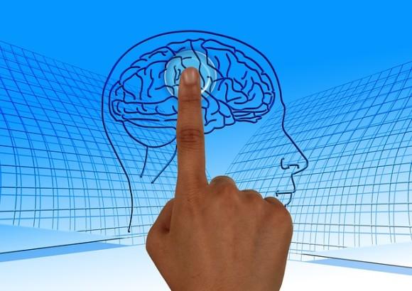 brain-770044_640_e