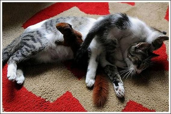 cats_and_squirell_08