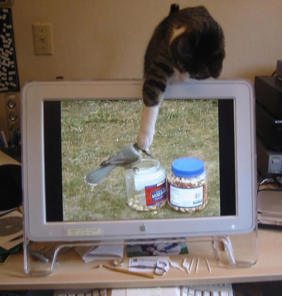 どんな獲物でもじっとり狙う猫たちの面白写真ギャラリー
