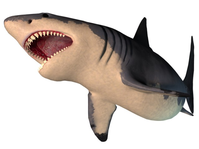 巨大ザメ、メガロドンの秘密に迫る
