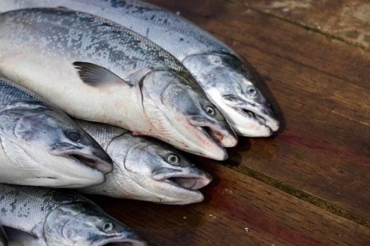 salmon-4143734_640_e