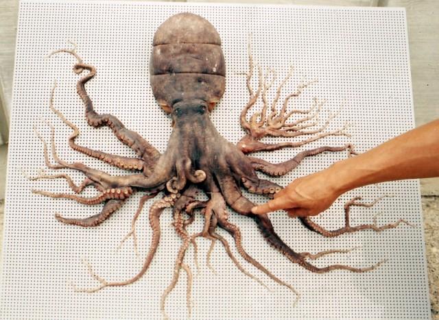 かつて96本の腕を持つタコが日本で捕獲されていた。志摩マリンランドで展示中