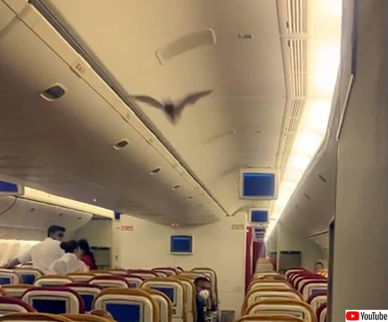 コウモリのハイジャック?飛行機内にコウモリが侵入し飛び回る