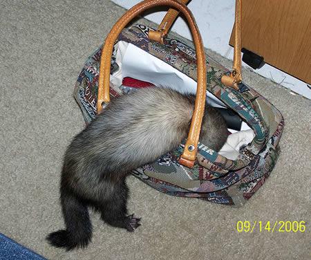 a97299_g187_11-purse