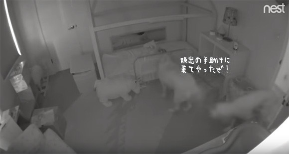 ドアを開けられるはずがない1歳の娘がいったいなぜ?監視カメラは見た!娘を部屋から脱出させていた2匹の犬の陰謀