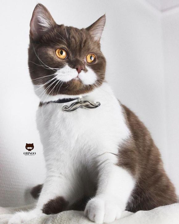 吾輩はヒゲ猫である。頬の白い模様がゴージャスなヒゲに見えるインスタアイドル、フランスの猫「グリンゴ」