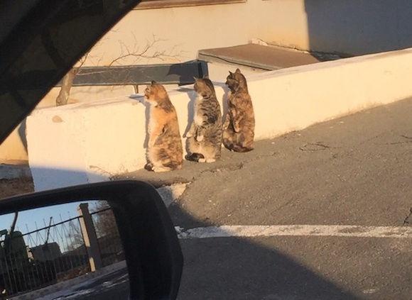 シュールすぎた。3匹の猫が二足立ちして並びながら何かを監視している風景