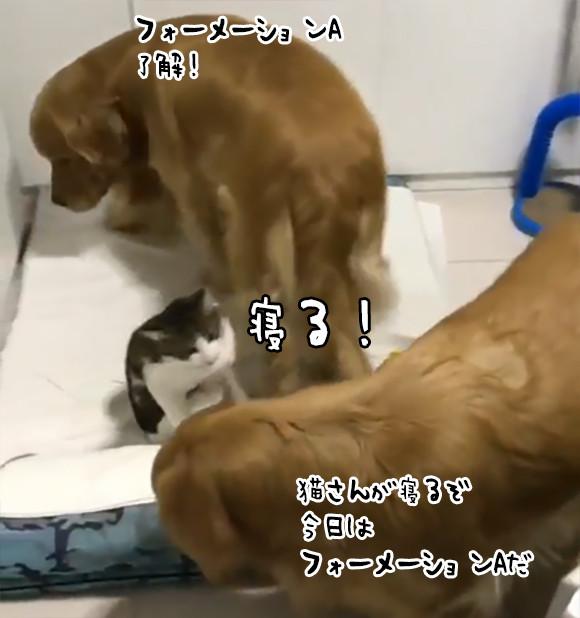 完全警備体制で猫の眠りをサポートする2匹の犬。ユニクロ・ヒートテック並みの極暖効果も!