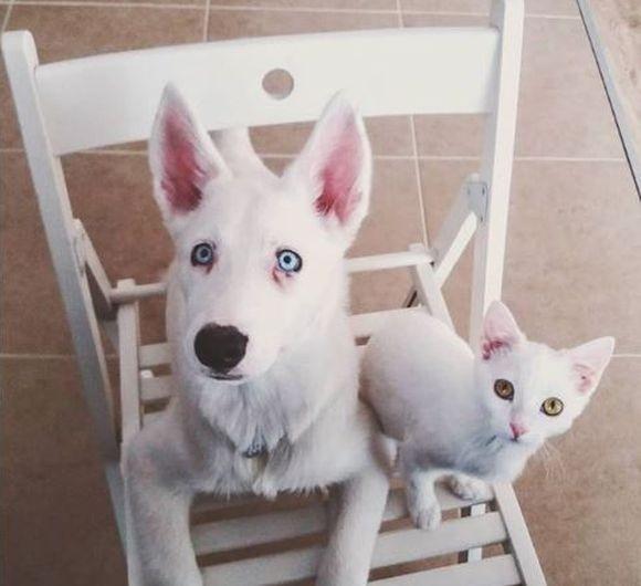 白い子犬に友達が欲しい。と思っていた矢先の出来事でした。白い野良子猫が「私のことですか?」と待ち構えていた件