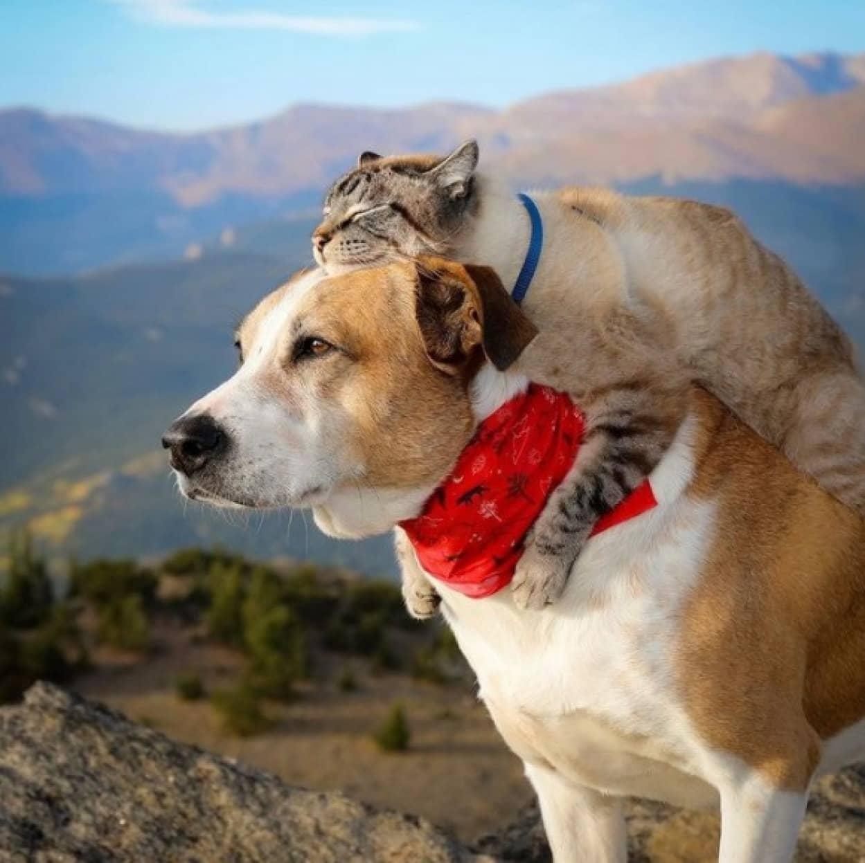 犬と猫が仲良く飼い主と一緒に冒険の旅へ