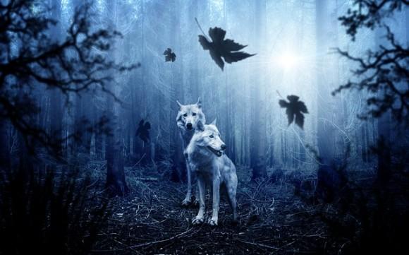 野生の王国となったチェルノブイリ、オオカミたちが繁殖し生息域を広げつつある(ウクライナ)