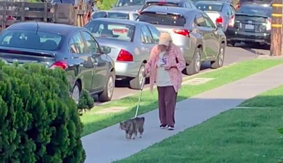おばあさんの散歩の歩調に合わせて、ゆっくりゆっくり寄り添いながら歩く猫
