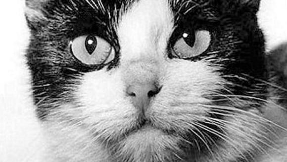 cat2_e0