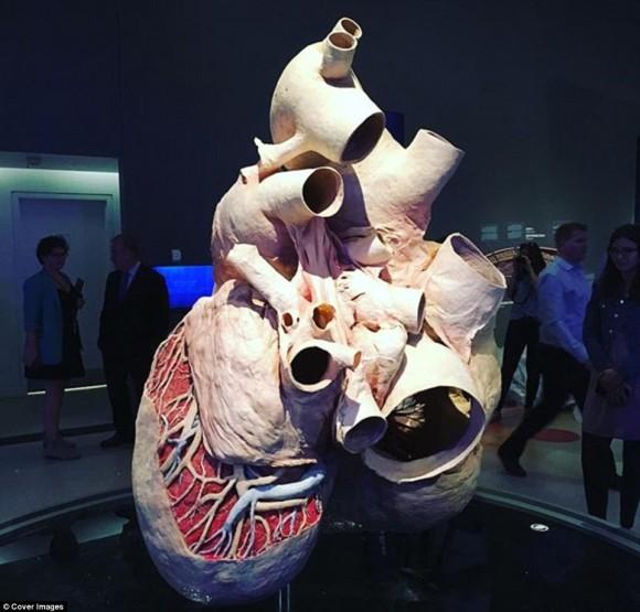 巨大です。シロナガスクジラの心臓標本の作り方(閲覧注意)