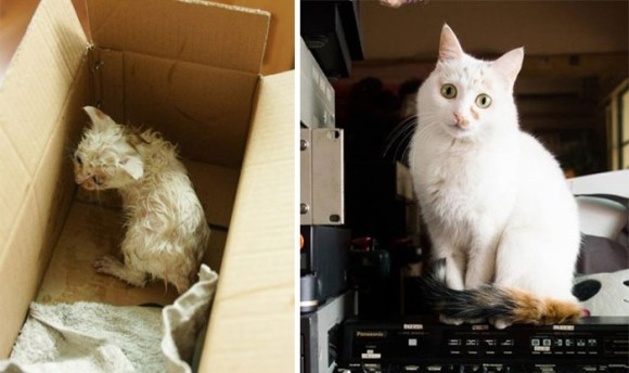 これぞ九死に一生。人間の手により救出された猫たちのビフォア・アフター(閲覧注意)