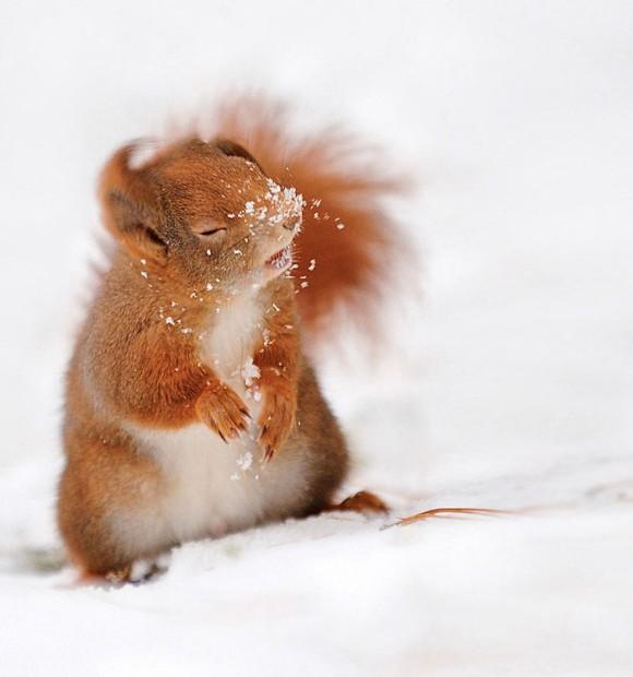 雪を払うリス
