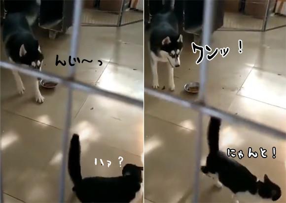 犬生最悪のミス。それは猫に吠えたことだった。