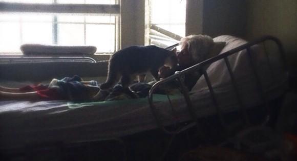 残された時間がわずかとなってしまったおばあさんと片時も離れたくない猫のいる光景