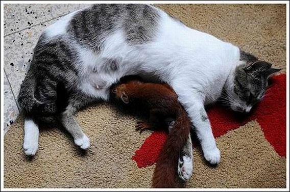 cats_and_squirell_05