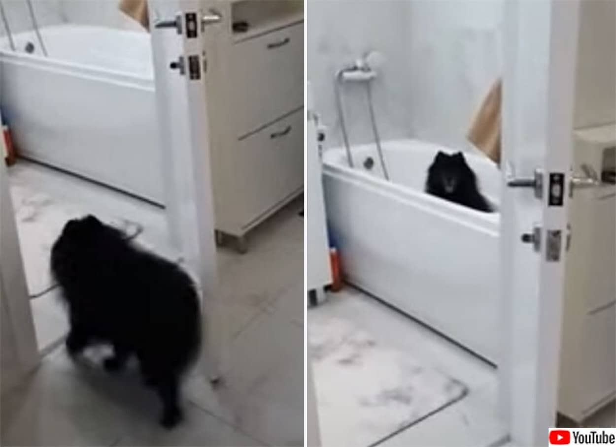 散歩の後は脚を洗うの。風呂場に直行するおりこう犬