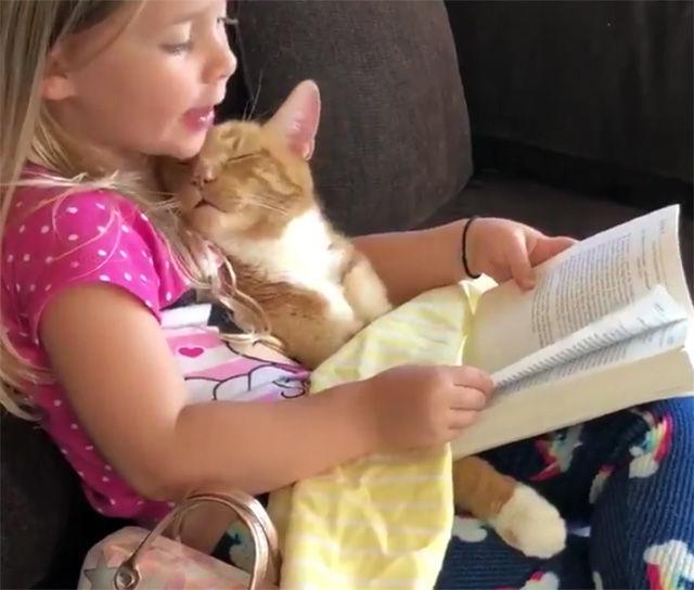 今日はどんなお話が聞きたい?ヒザの上で眠る猫に読み聞かせをする少女
