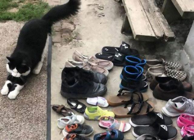 靴専門に盗む大泥棒猫