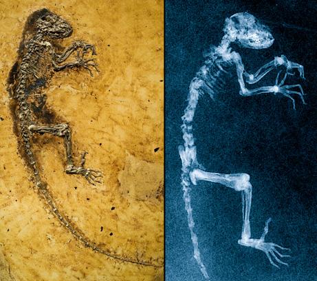 090519-ida-primate-fossil-link_big