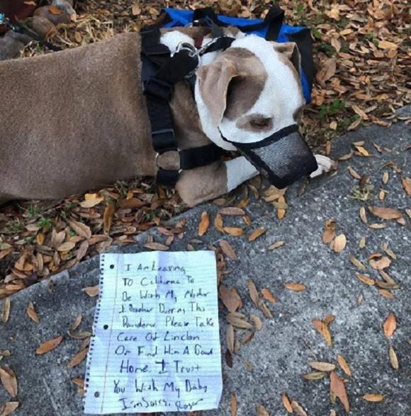 パンデミックの中、別の土地へ避難する飼い主に置き去りにされた犬(アメリカ)