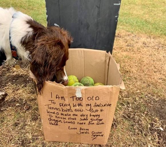犬の為に大量のテニスボールが公園に。箱に書かれたメッセージに思わず涙