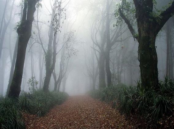fog_17