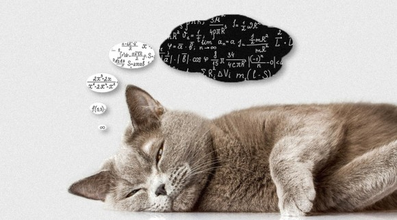 これまで科学が解き明かした猫の認知能力に関す
