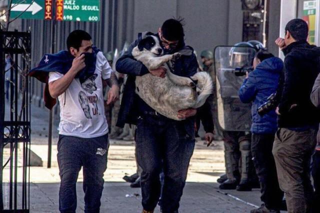 人間の争いに無関係の動物を巻き込んではならない。抗議デモ現場から犬を救い出す人々(チリ)
