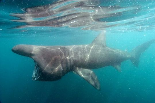 sharks_08