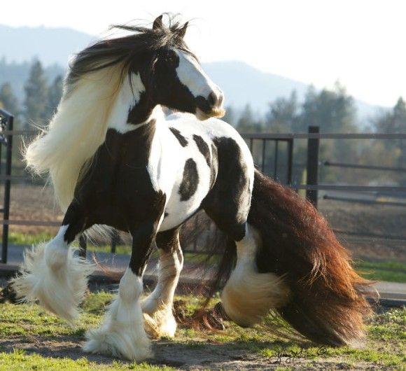 神話に出てきそうな神々しい馬「ジプシーバナー」にある口ヒゲにズームイン!
