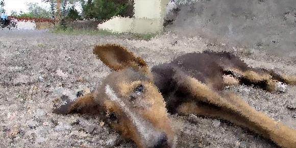 助けてくれる人だ!道に倒れ起き上がることもできない瀕死の犬が最後の力を振り絞って尻尾を振り続ける(インド)