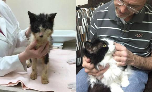 ケージに閉じ込められた状態で生死をさ迷っていた猫の救出物語(アメリカ)
