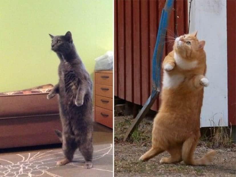 standing-cats3_e