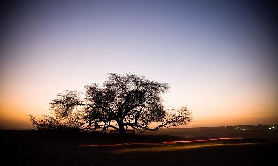 Tree of Life Bahrain IL-05