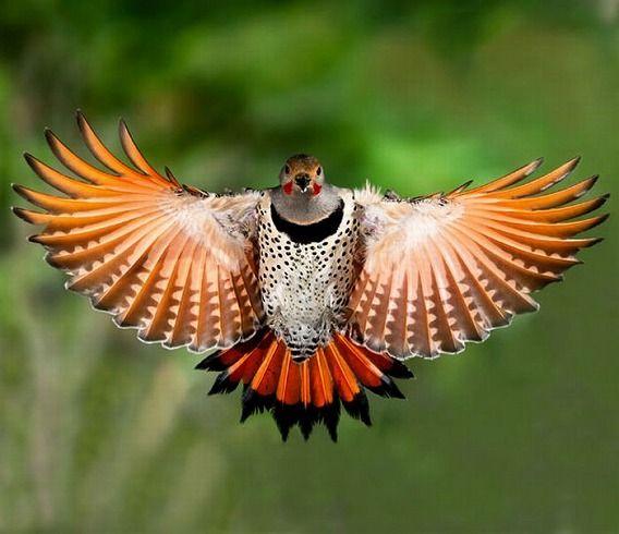 birds_10