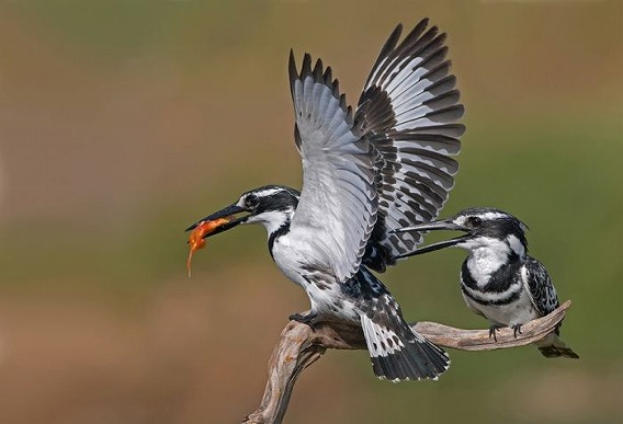 birds_31