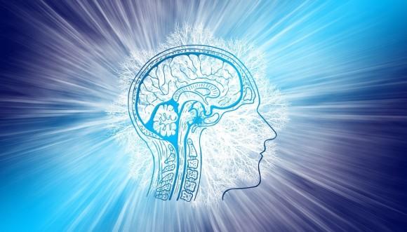 SF世界が現実になった感がすごい。実験室で培養した「ミニ脳」から脳波が検出される(米研究)