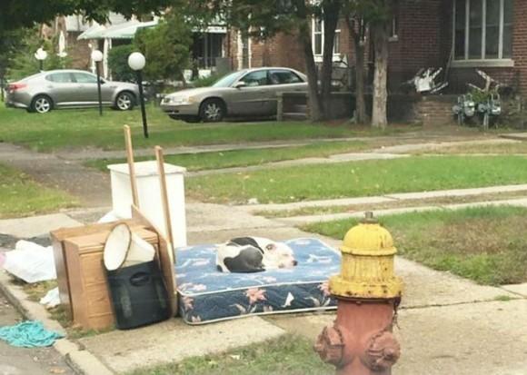 ここで待っててって言われたの。引っ越しで不用品と一緒に捨てられた犬、1か月たってもずっとその場で待ち続ける。