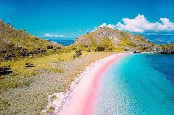 インスタ映えってレベルじゃないぞ!コモド島のピンクビーチのピンクと青のグラデーションが超絶綺麗!(インドネシア)