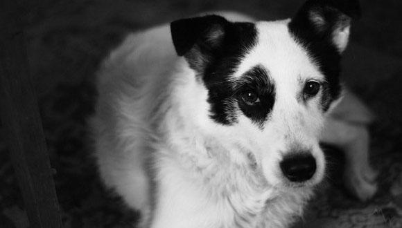 3度目の正直は確実にあった!かつて2度飼い主に見捨てられた犬が3度目に訪れた運命の出会い